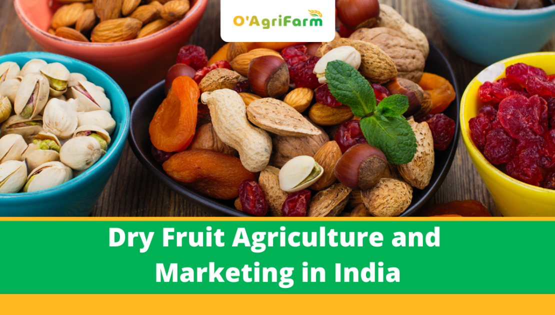 Dry fruit agriculture and marketing in India,