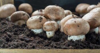 growing-mushrooms-1