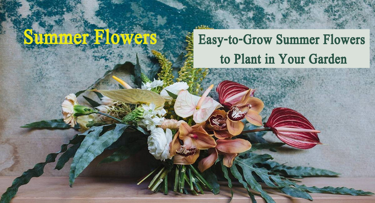 summer flowers-Easy-to-Grow Summer Flowers to Plant in Your Garden